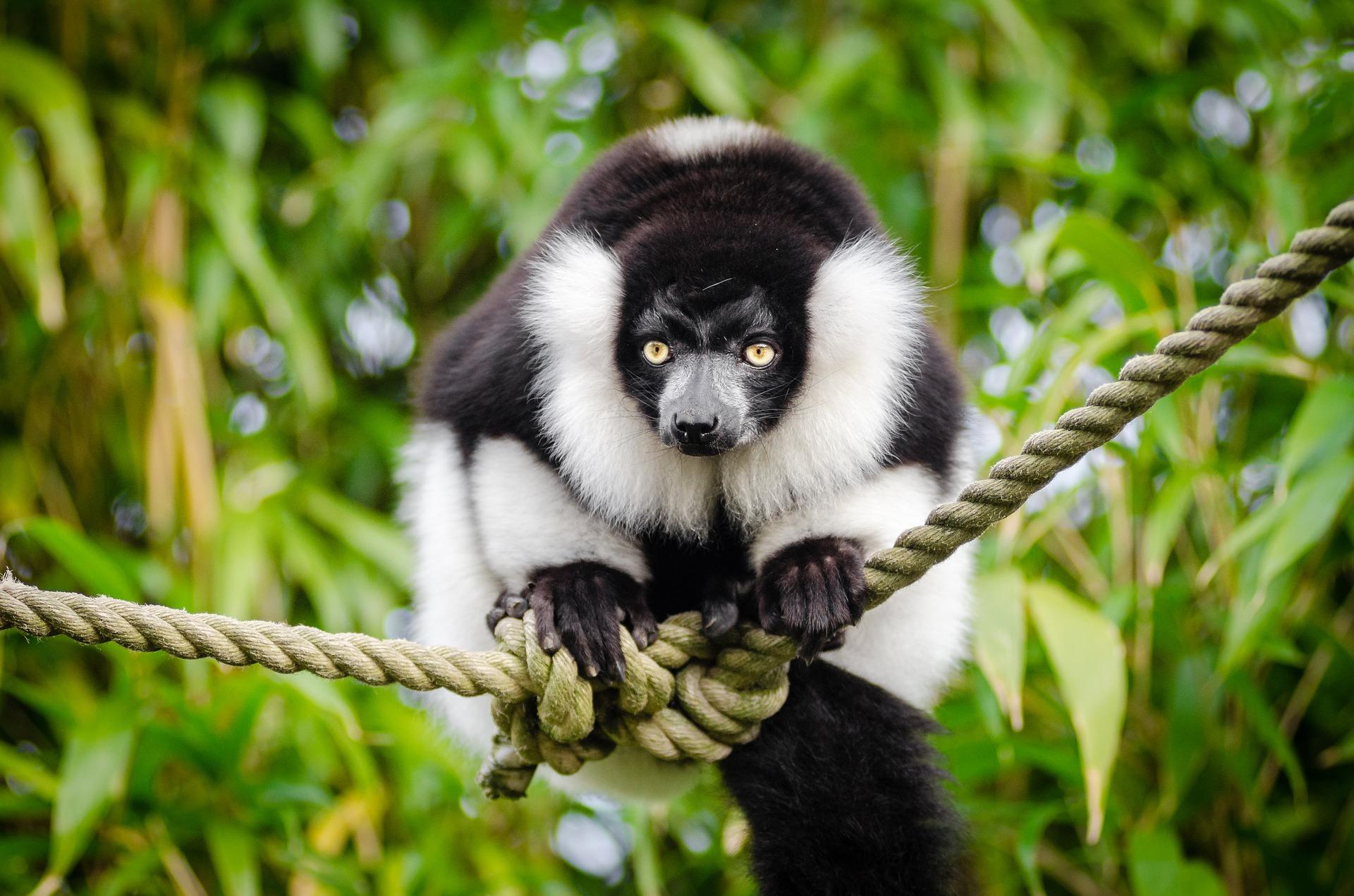 Grantour del Nord Madagascar e soggiorno mare