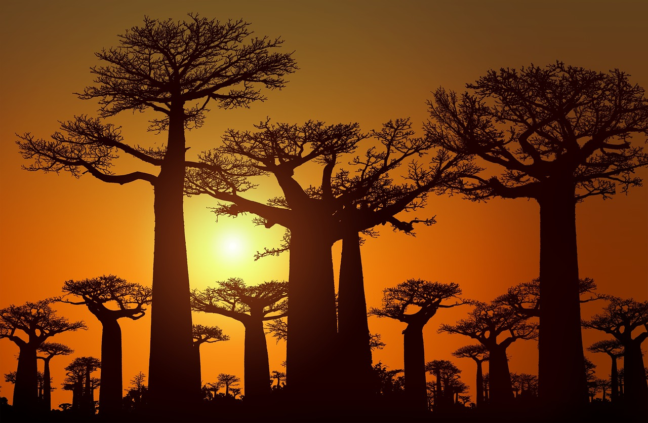 La via dei Baobab - Ovest Madagascar