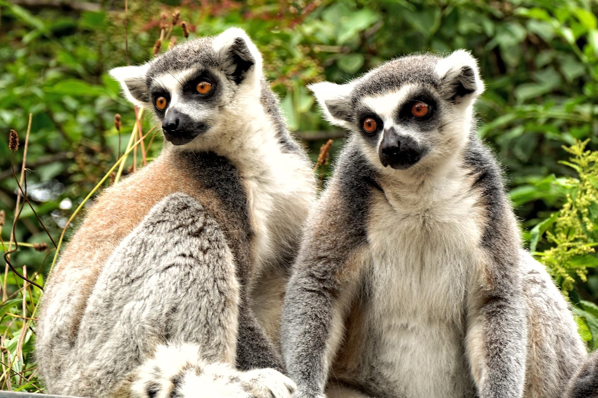 Madagascar - Tour del Nord